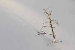 Simplicity - In Explore. Thank you. :) (~ Paula B) Tags: winter snow light shadow newfoundland simplicity