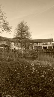 London Wetland Center,  Barnes,  London