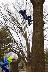 Arborist and boy in blue jacket (Montgomery Parks, MNCPPC) Tags: treeclimbing woodsidepark january2017 2017