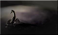 ODC-Beware The Scorpion (☼☼Jo Zimny Photos☼☼) Tags: glow clean scorpion copper minimalism decor topaz adjust odc pse13