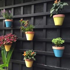 Happy garden (jkerssen) Tags: charleston