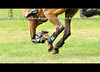 Hooves, boots, shoes, studs (Rock and Racehorses) Tags: horse feet shoes crosscountry xc hoof studs pads gallop hooves eventing eventer jerseyfresh bellboots eskadron webska3099