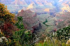 Trailhead view, Grand Canyon National Park, USA (tvdflickr) Tags: flowers trees arizona sky usa clouds nationalpark nikon nps grandcanyon scenic canyon hike trail nationalparks southrim hikingtrail d300 grandcanyonnationalpark earlyfall nikond300 nikonflickraward indiangardensgrandcanyonnationalpark