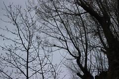 The night is coming (maikrofunky) Tags: park parque tree birds night 35mm canon girona pjaros gerona pjaro llivia notreatment 600d