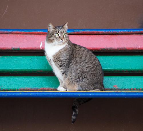 Bench 1 ©  Andrey