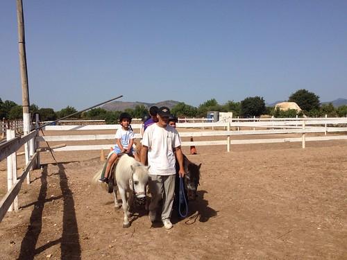 Horses_The Paula Method_9