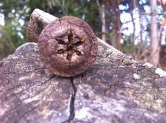 #naturaleza#tqm  (krishnna.pincheira) Tags: naturaleza tqm puertosaavedra