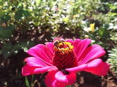 Festa na flor (Claudia Mendes2015) Tags: flores planta flora plantas flor