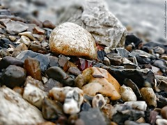 Coloured pebbles (dksesh) Tags: london thames river sony south bank seshadri sesh harita sonyxperia dhanakoti haritasya seshfamily sonyxperiaz2