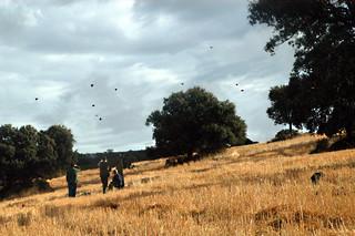 Spain Ibex Hunt & Driven Partridge Hunts 29