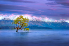 The Muse (Sapna Reddy Photography) Tags: wanaka newzealand water lake tree mountains twilight dawn serene colors clouds