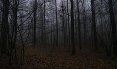 Foggy forrest (RigieNL) Tags: fog foggy mist misty mistig bos forrest limburg sony sonya6000 bomen boom nederland netherlands