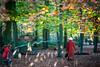 Into the woods (M W Pinsent) Tags: omot fairytales littleredridinghood photomontage charlesperrault brothersgrimm