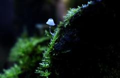 pinhead Fungi (Tag1066) Tags: macro fungi mushroom toadstool fungus tree carymoorenvironmentalcentre