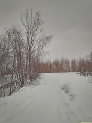 По белым снегоходкам в тех низких красках неба..