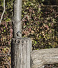 _DSC4623 (purin_cess) Tags: centralpark 2016 autumn 11月 十一月 秋 中央公園 紐約 ny newyork