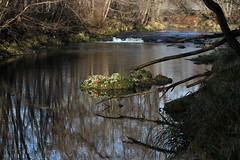 Speciale (lincerosso) Tags: fiume soligo collina inverno luce riflessi trasparenze chiaroscuri bellezza armonia o