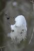 L1320437 (BS-Foto) Tags: leica vlux1 bsfoto schnee snow neige weis weiss stadtwald augsburg clematis