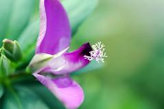 Colors of autumn (Pensive glance) Tags: flower plant fleur plante