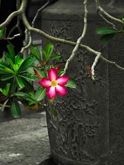 2016_04-Bangkok-M00081 (trailbeyond) Tags: architecture asia bangkok building flower location outdoors pink religiousbuilding temple templeoftheemeraldbuddha thailand thegrandpalace watphrakaew