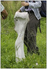 _DSC5598PJ_resultat (http://phj.bookfoto.com/) Tags: botswana philippe jubeau afrique delta okavango ossement elephant