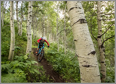 WoW Trail Aspen Singletrack (Photo-John) Tags: mtb bike cycling adventure utah singletrack wow aspens outdoor sports action bici velo parkcity wowtrail aspengrove wasatch travel lush trees mountainbike mountainbiking mountainbiker wasatchmountains adventurephotography forest stockphotography editorial editorialphotography canon eos 7dmarkii 7dmkii