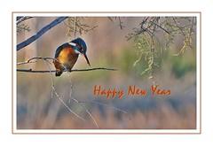 Buon Anno - Happy New Year (Jambo Jambo) Tags: buonanno happynewyear felizañonuevo bonneannée eingutesneuesjahr felizanonovo сновымгодом gottnyttår godtnyttår selamattahunbaru kalichronia onnellistauuttavuotta šťastnýnovýrok boldogújévet xinniènkuaile felicxannovanjaron jambojambo nikond5000 nikonflickraward