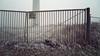 P1050205vf30 (hans hoeben) Tags: fence frozenmorningfencefrozenmorning wrong entrance frozen morning wind mill amsterdam west harbour dutch industry field winter lumix lx3 dmc panasonic elekto power lines locked fog mist