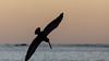 pelican (cbonsig) Tags: costarica guanacaste samara provinciadeguanacaste cr