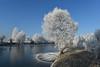Birken (Pixelkids) Tags: rauhreif bayern olching fischweiher winter winterlandschaft landschaft