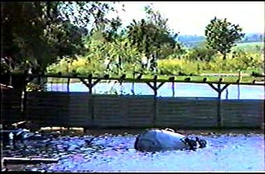 sturmflut 89NDVD_056
