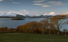 Loch Lomond (Douglas Collinson) Tags: loch ben lomond nationalpark scotland snow winter light evening trees polariser nikon d800 1635