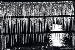 Rideau de Glace (Franck Baduel) Tags: léman arctique polaire glace tempète yvoire evian