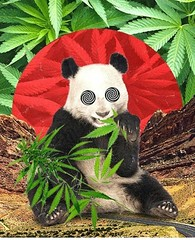 Me after a busy Super Bowl Sunday at @VapeOnTheLake & a late night 3 gram moon rock joint courtesy of @mrkushvip.. Check my stories to see it in action! 🐼🐼 #StonedPanda #GiveMeAllTheMunchies Repost from @weedtotheworld #topshelflife (tweedledoob) Tags: cannabis medival marijuana canadian stoners high times weed marihuana ganja joints tweedledoob