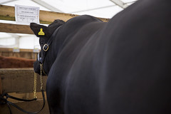 Kent_County_Show_2014_Highlights_006
