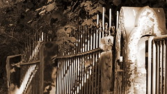 alt (Don Bello Photography) Tags: sepia europa europe explorer zaun 1000views hallesaale 2015 sachsenanhalt 2000views 10000views 5000views 15000views 3000views 4000views 1500views 100favorites 50favorites 200favorites 150favorites lumixphotographer donbello panasonicphotographer panasonicfz150 lumixfz150 reinhardbellmann acdseeultimate8 donbellophotography