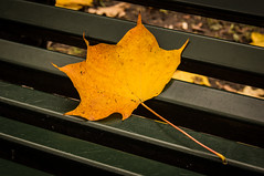 Leaf (Matt H. Imaging) Tags: ©matthimaging season autumn fall sony slt slta55v a55 sal1855 sonyalpha leaf