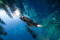 Jumping into Blue Pool, Oregon. (Justin Knott) Tags: