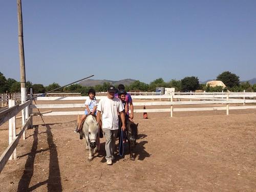Horses_The Paula Method_13