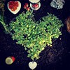 Green grave (Bim Bom) Tags: grave graveyard berus heart