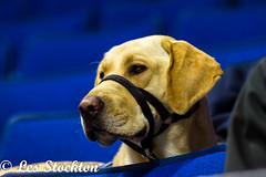 20161231_19555501-Edit.jpg (Les_Stockton) Tags: tulsaoiilers wichitathunder jääkiekko jégkorong sport xokkey canine dog eishockey haca hoci hockey hokej hokejs hokey hoki hoquei icehockey ledoritulys pet íshokkí tulsa oklahoma unitedstates us