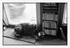 i'm finished (chickentender™ (Eyewanders Foto)) Tags: 35mm 35mmf20 citizensphotoprocessed lynx onp pentaxa3520 pentaxmxsilver analog beach beachtrip bowl buyfilmnotmegapixels eyewandersfoto film food kalaloch nakoluktan pacificnorthwest passedout puppy sleepingdoglie summer2016 thedog