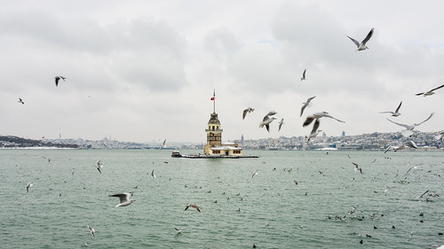 A winter day in Bosphorus. The seagulls and Maiden's Tower...