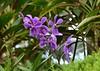 Singapore Botanic Gardens (careth@2012) Tags: