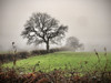 Foggy Winter Trees (Carol Crook) Tags: trees tree winter fog mist view landscape countryside cheshire uk