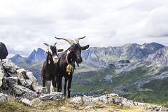 Valle de Tena, Pirineo Aragonés (ipomar47) Tags: pirineos pirineo huesca aragones españa spain valle tena pentax k20d naturaleza nature ruby5 ruby10