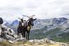 Valle de Tena, Pirineo Aragonés (ipomar47) Tags: pirineos pirineo huesca aragones españa spain valle tena pentax k20d naturaleza nature