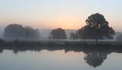 Richmond Park, London. (richard.mcmanus.) Tags: gettyimages london richmondpark water reflection dawn trees landscape mcmanus