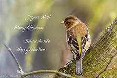 Joyeuses fêtes - Happy holidays (dom67150) Tags: merrychristmas happynewyear joyeuxnoel bonneannée