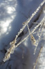 Eiskristalle (BLUESPACES PHOTOGRAPHY) Tags: nikon coolpix a winter eis kristalle
